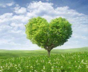 Дерево Вожделения